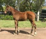 Breednet Gallery - Hampton Court Spendthrift Farm, Vic