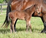 Breednet Gallery - Reset Blue Gum Farm, Vic