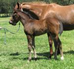 Breednet Gallery - Better Than Ready Davali Thoroughbreds