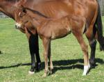 Breednet Gallery - Canford Cliffs (Ire) Davali Thoroughbreds