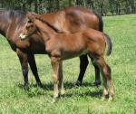 Breednet Gallery - Olympic Glory (Ire) Davali Thoroughbreds