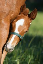 Breednet Gallery - Sizzling Willow Park, NSW