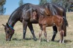 Breednet Gallery - Smart Missile Ashleigh Thoroughbreds, NSW