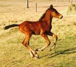 Breednet Gallery - Jabali Tallulah Downs Broodmares