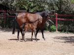 Breednet Gallery - Skyclad Allandale Park Thoroughbreds