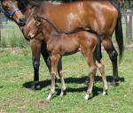 Breednet Gallery - Eurozone Davali Thoroughbreds, NSW