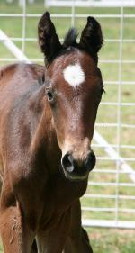 Breednet Gallery - Hinchinbrook Pepper Tree Farm, Cowra, NSW