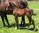 Breednet Gallery - Fastnet Rock Davali Thoroughbreds, NSW