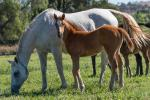 Breednet Gallery - Sepoy Holbrook Thoroughbreds, NSW