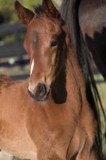 Breednet Gallery - Sidestep Godolphin Stud, Woodlands, NSW
