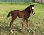 Breednet Gallery - Squamosa Bred by Pat Starr Racing
