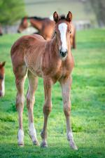 Breednet Gallery - Not A Single Doubt Holbrook Thoroughbreds