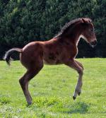 Breednet Gallery - I Am Invincible Lime Country Thoroughbreds