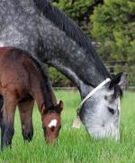 Breednet Gallery - Sebring Lime Country Thoroughbreds