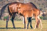 Breednet Gallery - Air Force Blue (USA) Holbrook Thoroughbreds
