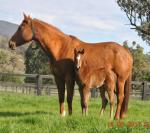 Breednet Gallery - Redoute's Choice Kitchwin Hills