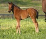 Breednet Gallery - I Am Invincible Middlebrook Valley Lodge