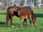 Breednet Gallery - Exceed and Excel Newgate Farm