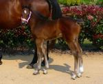 Breednet Gallery - Lucky Owners Roona Lodge
