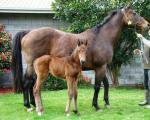 Breednet Gallery - Fast 'n' Famous Highden Park, NZ