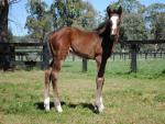 Breednet Gallery - Tale of the Cat (USA) Kitchwin Hills