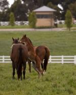 Breednet Gallery - Exceed and Excel Woodside Park