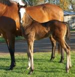 Breednet Gallery - High Chaparral (IRE) Middlebrook Valley Lodge