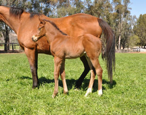 Breednet Gallery - Churchill (Ire) Coolmore Stud