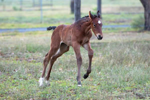 Breednet Gallery - Sebring Willow Park, NSW