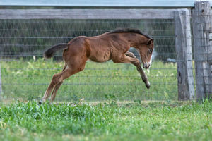Breednet Gallery - Charge Forward Willow Park, NSW
