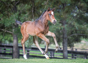 Breednet Gallery - Rubick Middlebrook Valley Lodge, NSW