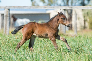 Breednet Gallery - Dubious Kenmore Lodge, Qld