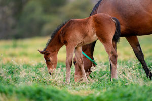 Breednet Gallery - Pierro Holbrook Thoroughbreds for Bob and Sandra Peters
