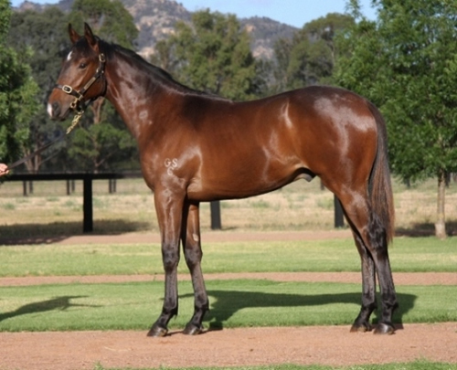 Snowland at Gold Coast Yearling Sale