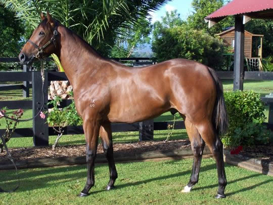 Snowland at Classic Yearling Sale