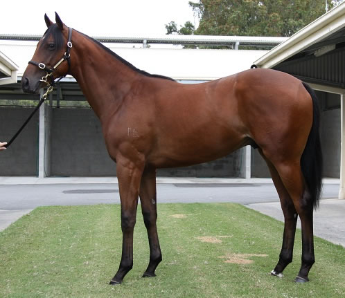 Foreplay at Gold Coast Yearling Sale Session 5