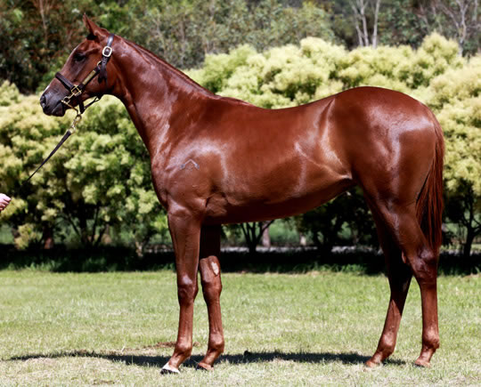 All Bar One at Gold Coast Yearling Sale Session 5