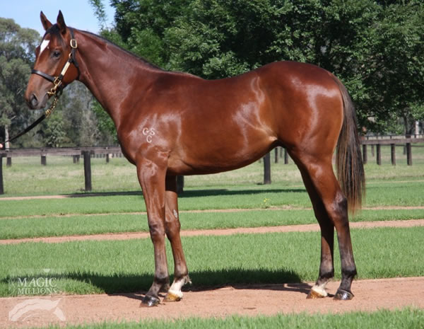 Northern Meteor at Gold Coast Yearling Sale