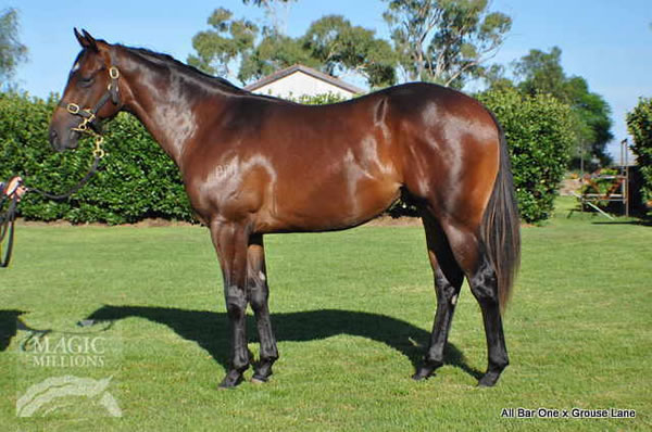 All Bar One at QTIS Yearling Sale