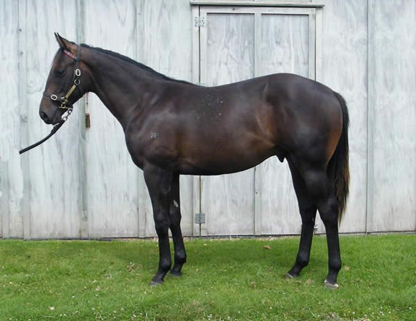 Don Eduardo at Festival Yearling Sale