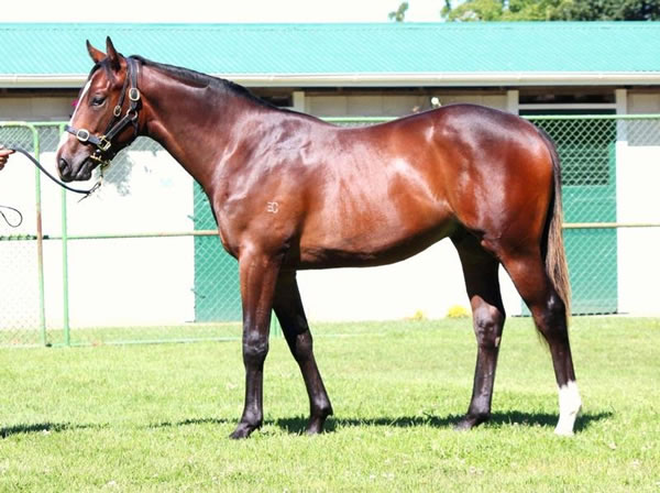 Keeper at Premier Yearling Sale