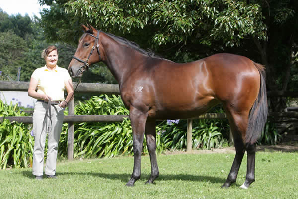 Keeper at Select Yearling Sale