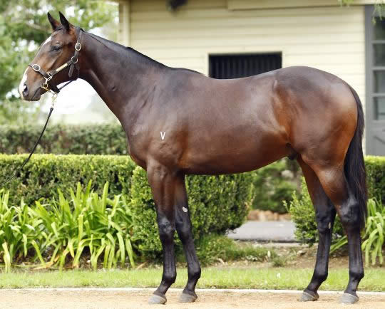 Onemorenomore at Australian Easter Yearling Sale Session 2