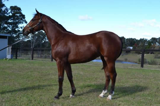 Northern Meteor at Classic Yearling Sale Winter Book