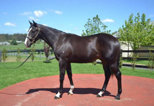Onemorenomore at Classic Yearling Sale Winter Book