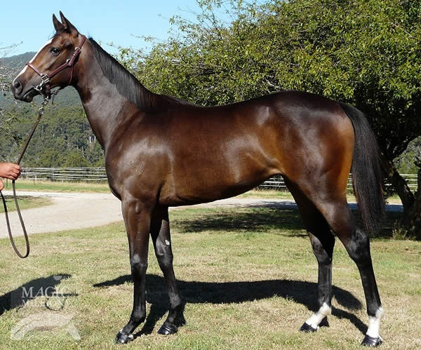 West Quest at Tasmanian Yearling Sale