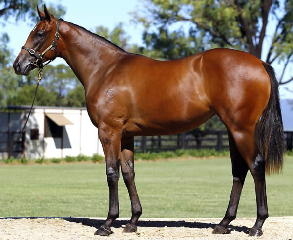 Northern Meteor at Australian Easter Yearling Sale