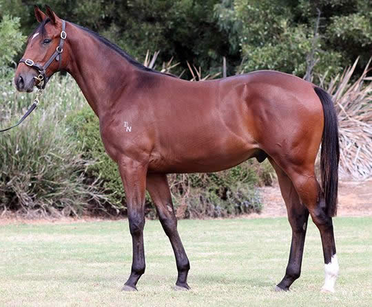 Onemorenomore at Premier Yearling Sale