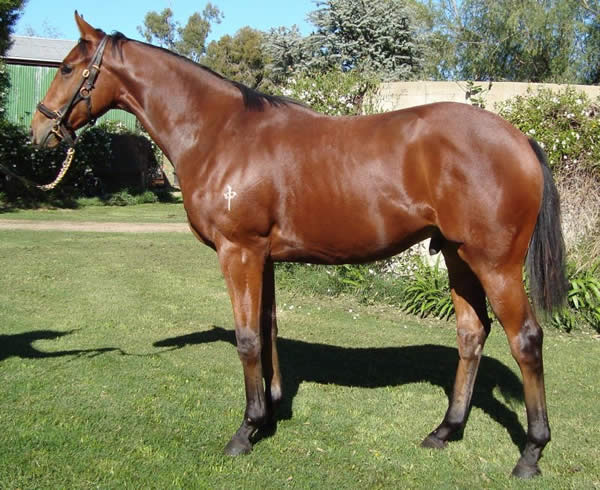 Foreplay at VOBIS Gold Yearling Sale