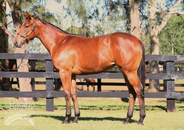 Onemorenomore at Gold Coast Yearling Sale